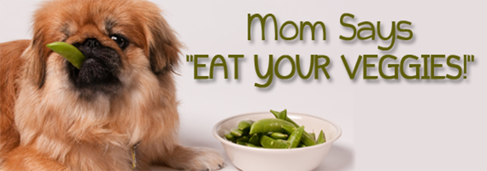 dog eating veggies