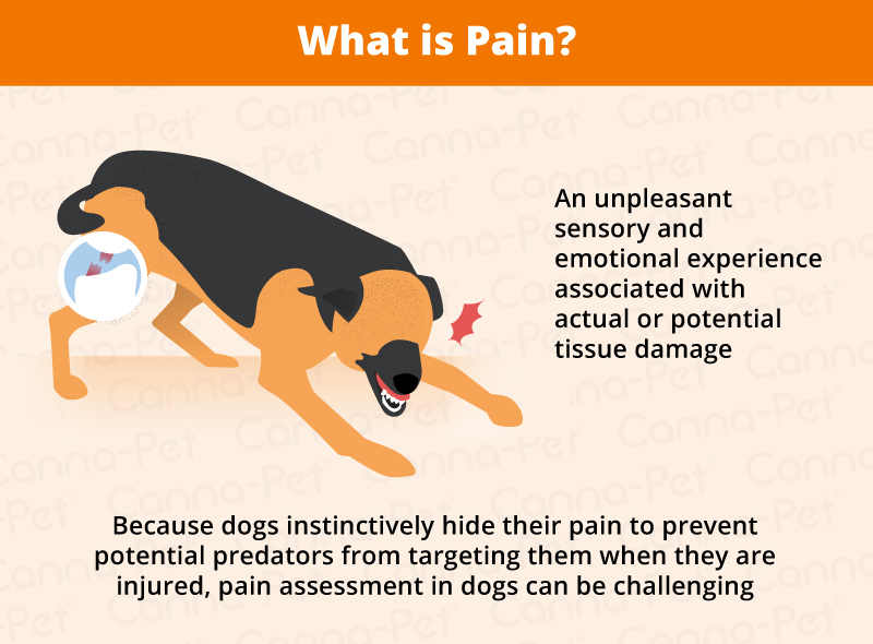 what is pain in dogs
