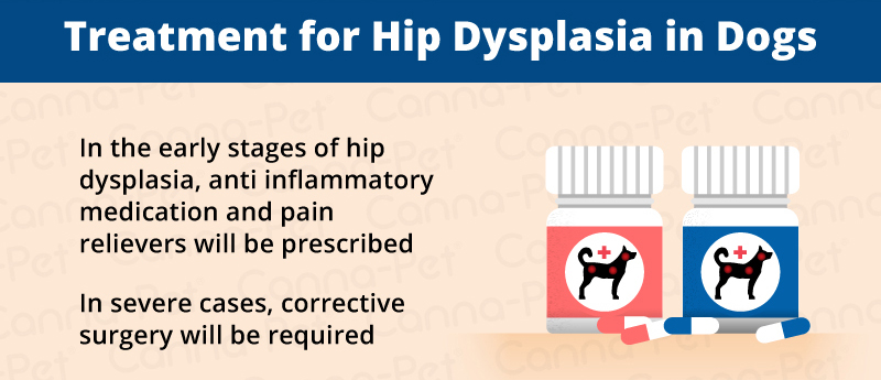 Hip Dysplasia in Dogs