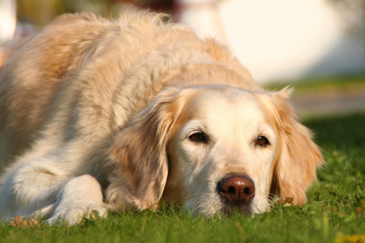 lyme disease in dogs_canna-pet