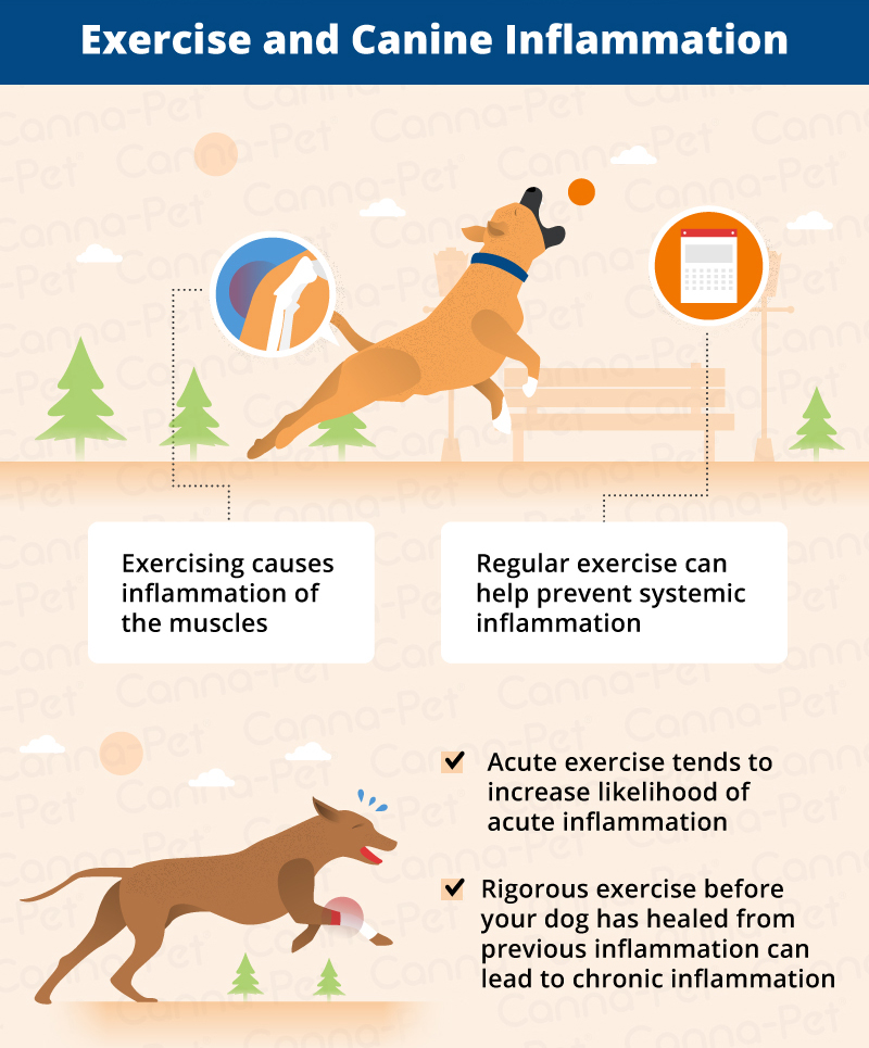 Exercise and Dog Inflammation