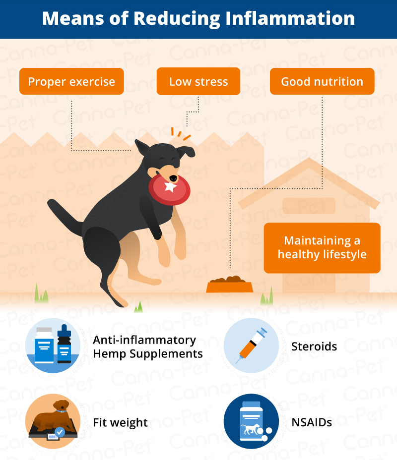 Reducing Dog Inflammation