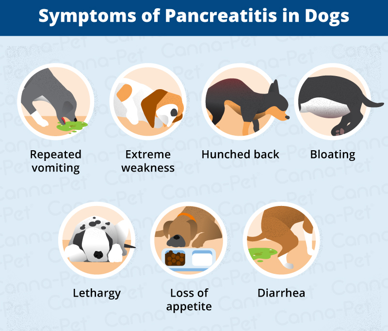 Pancreatitis in Dogs: Symptoms, Causes & More