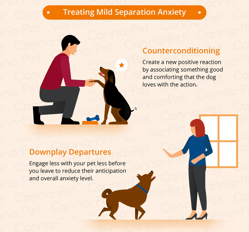 Separation Anxiety in Dogs | Canna-Pet