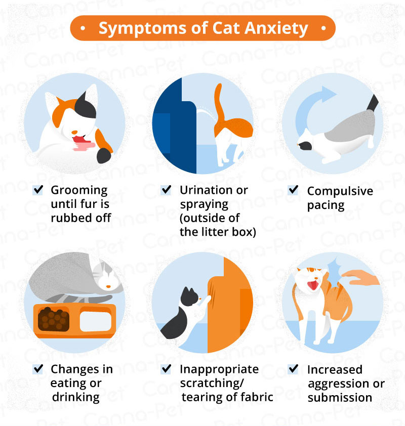 Anxiety in Cats | Canna-Pet