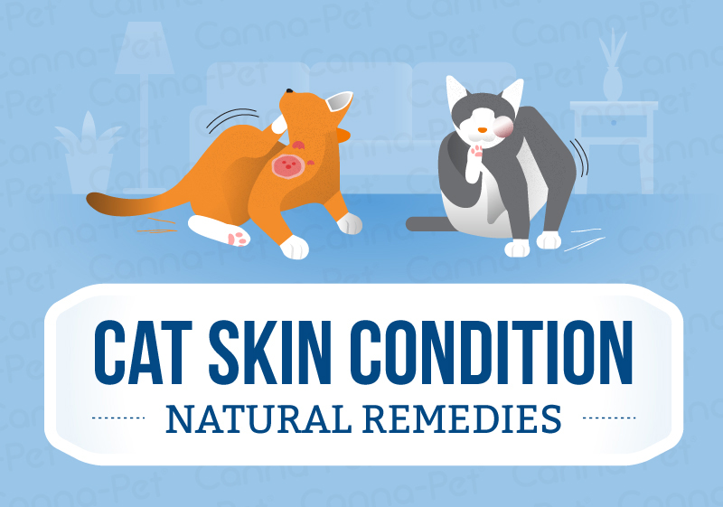 Cat Skin Conditions and Natural Remedies