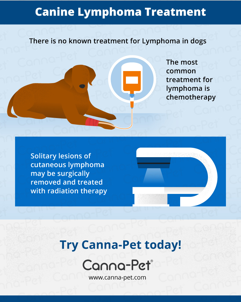 dog lymphoma