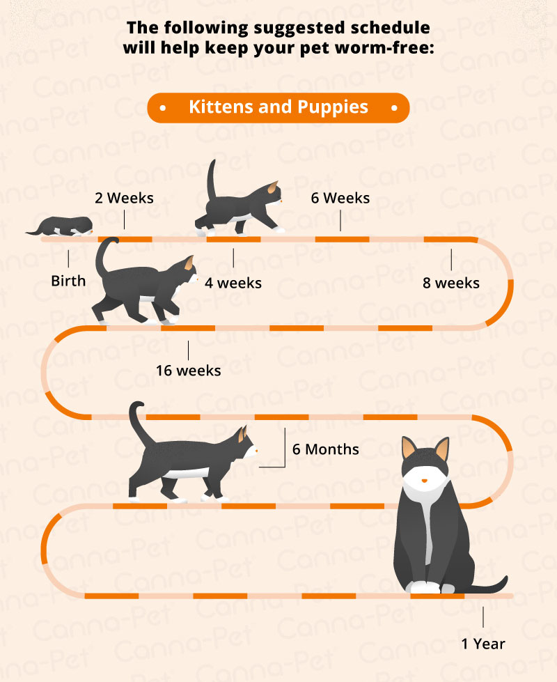 Worming Schedules For Cats Dogs Canna Pet