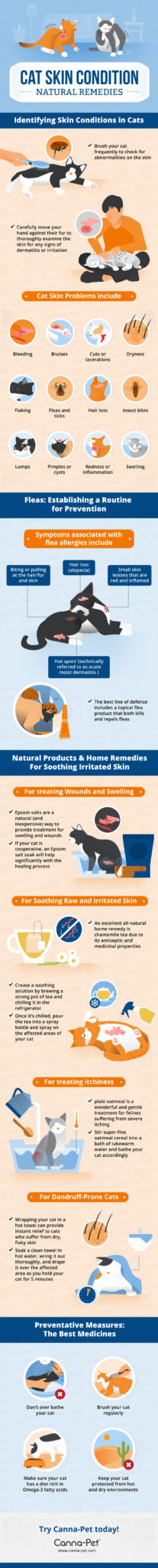 Cat Skin Conditions and Natural Remedies Infographic