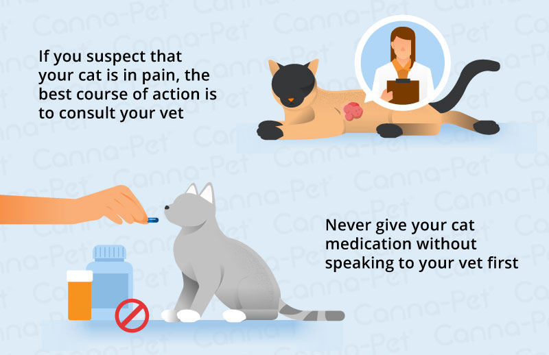 Common Pain in Cats | Canna-Pet