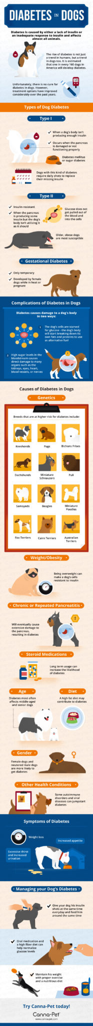 Dog Diabetes | Canna-Pet