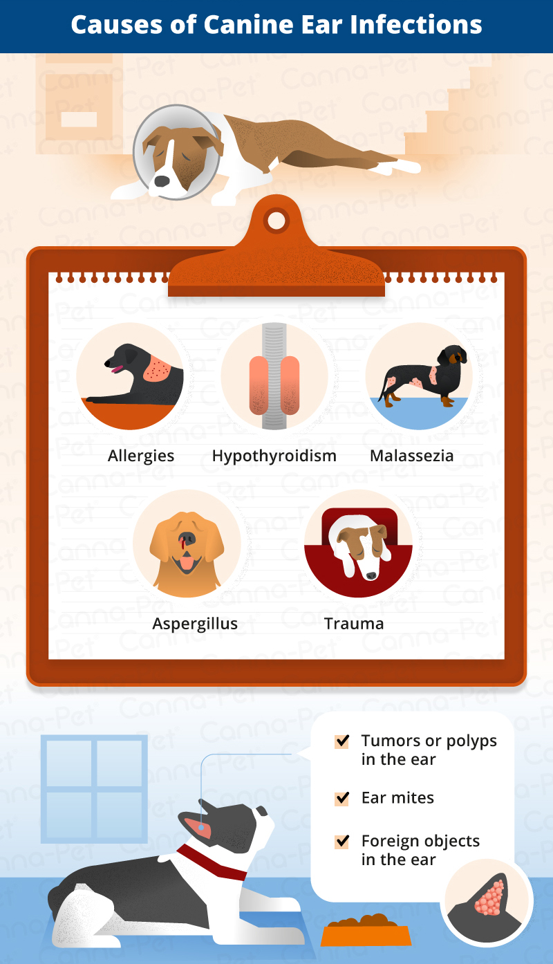 Dog Ear Infections: Types, Causes, & Treatment | Canna-Pet