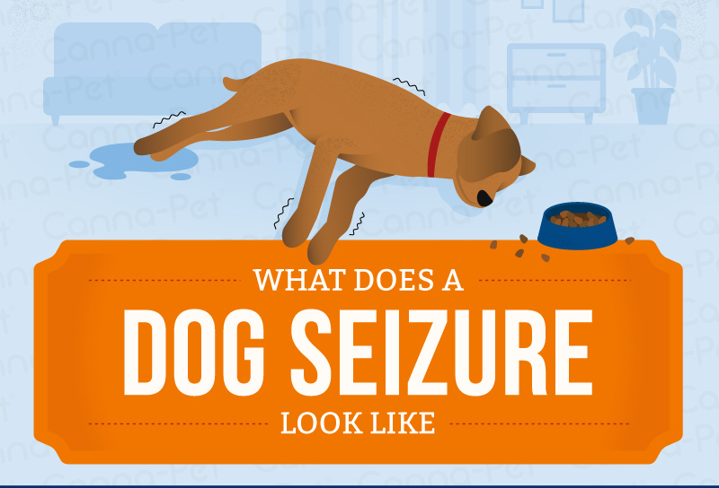 What Does a Dog Seizure look like