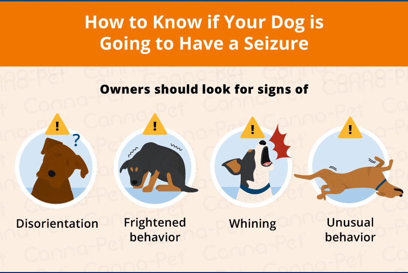 Signs of a dog seizure