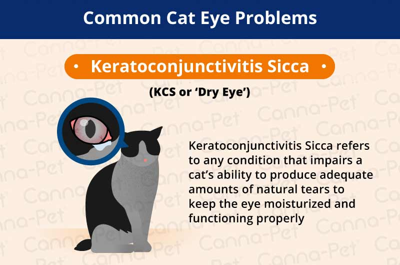 Common Types Of Cat Eye Problems