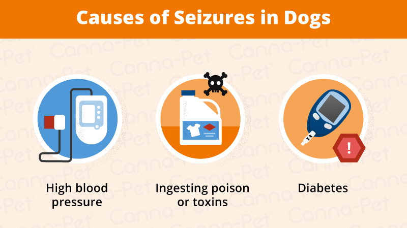 Dog Breeds Prone to Seizures