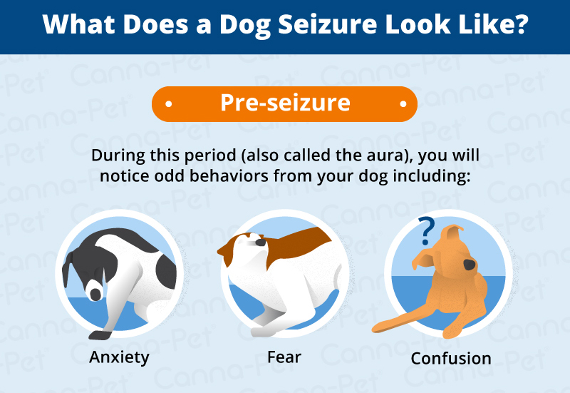 Side Effects of Dog Seizures