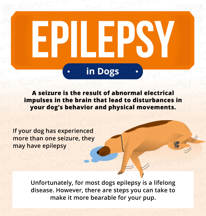 epilepsy in dogs signs  symptoms  treatment canna pet clip art brain images clipart brain coral