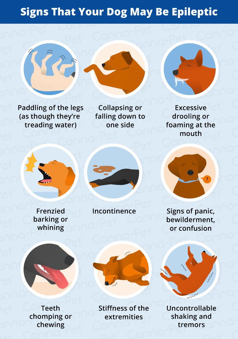 Signs Your Dog May Be Epileptic