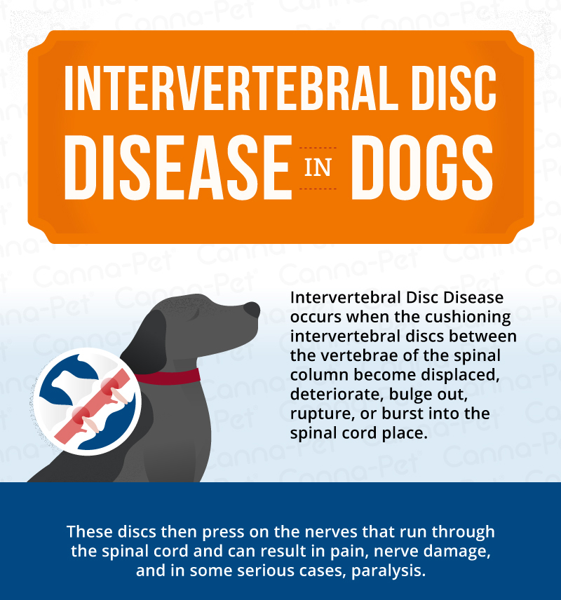 Intervertebral Disc Disease (IVDD) in Dogs | Canna-Pet