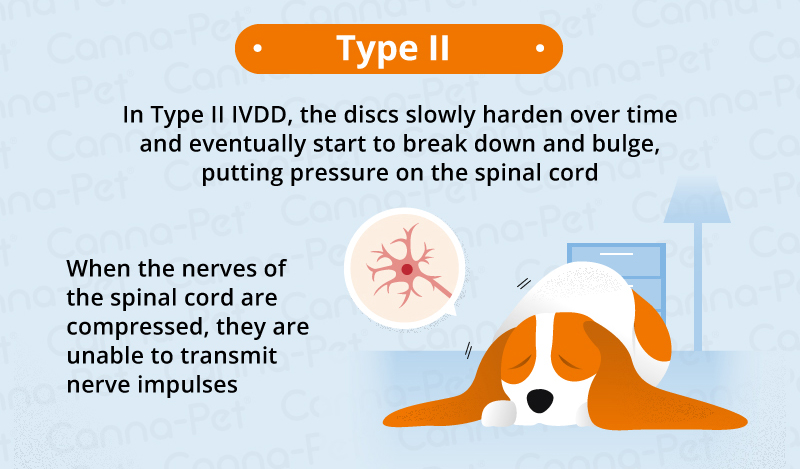 type 2 ivdd in dogs
