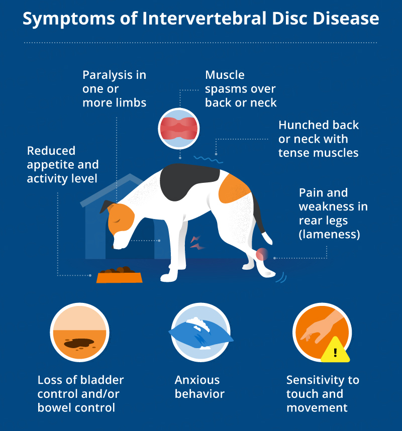symptoms of ivdd in dogs
