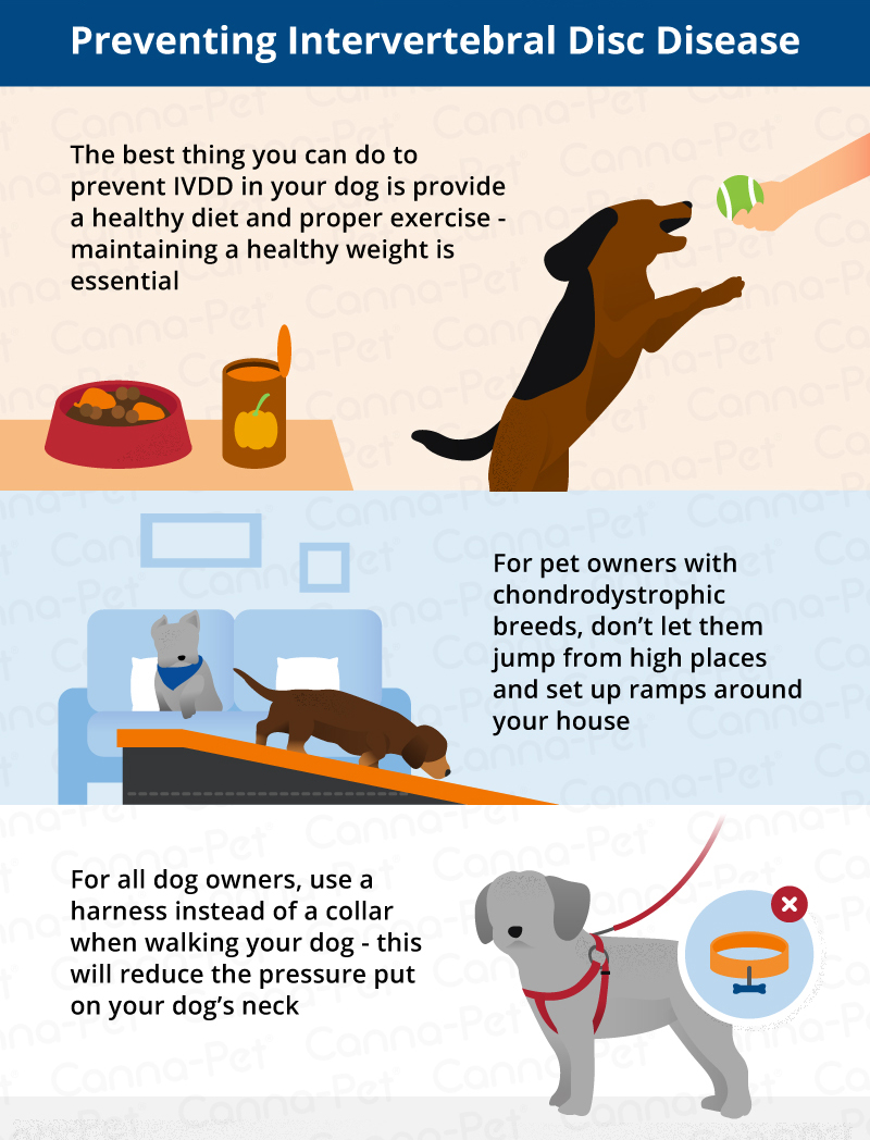 preventing ivdd in dogs