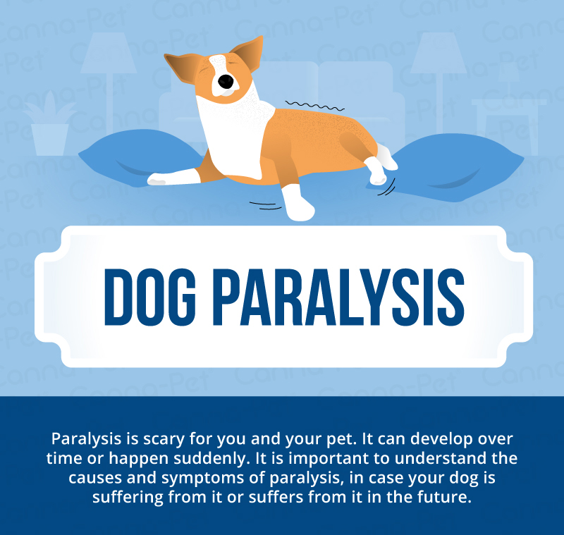 dog paralysis infographic