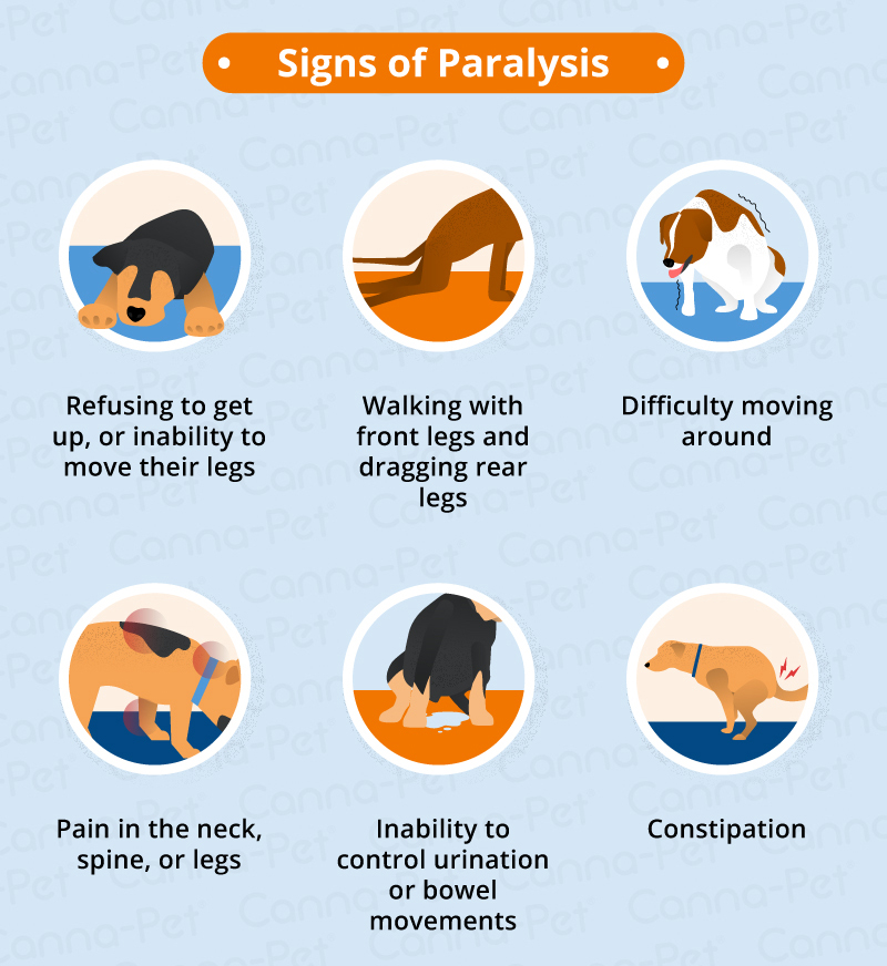 Dog Paralysis: Common Causes & Treatment | Canna-Pet