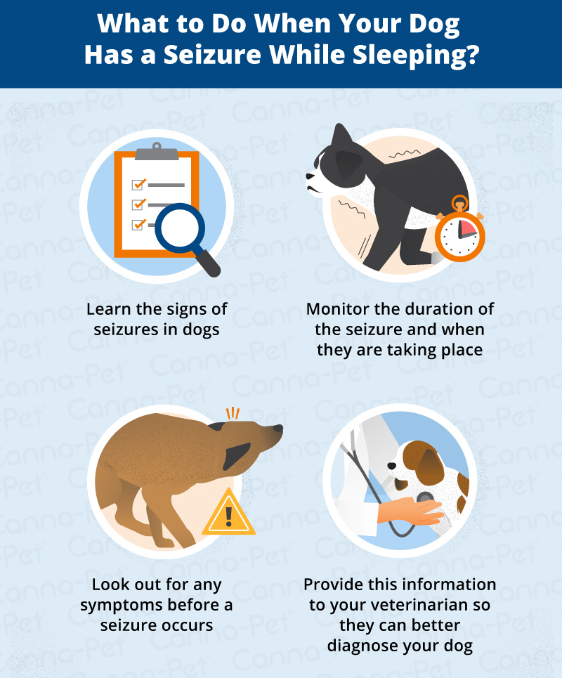Can A Dog Have Seizure While Sleeping