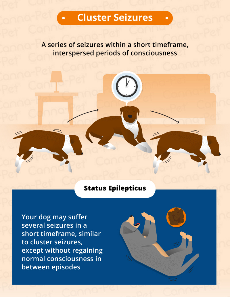 Types Of Wine Bottles Infographic: Types Of Seizures In Dogs