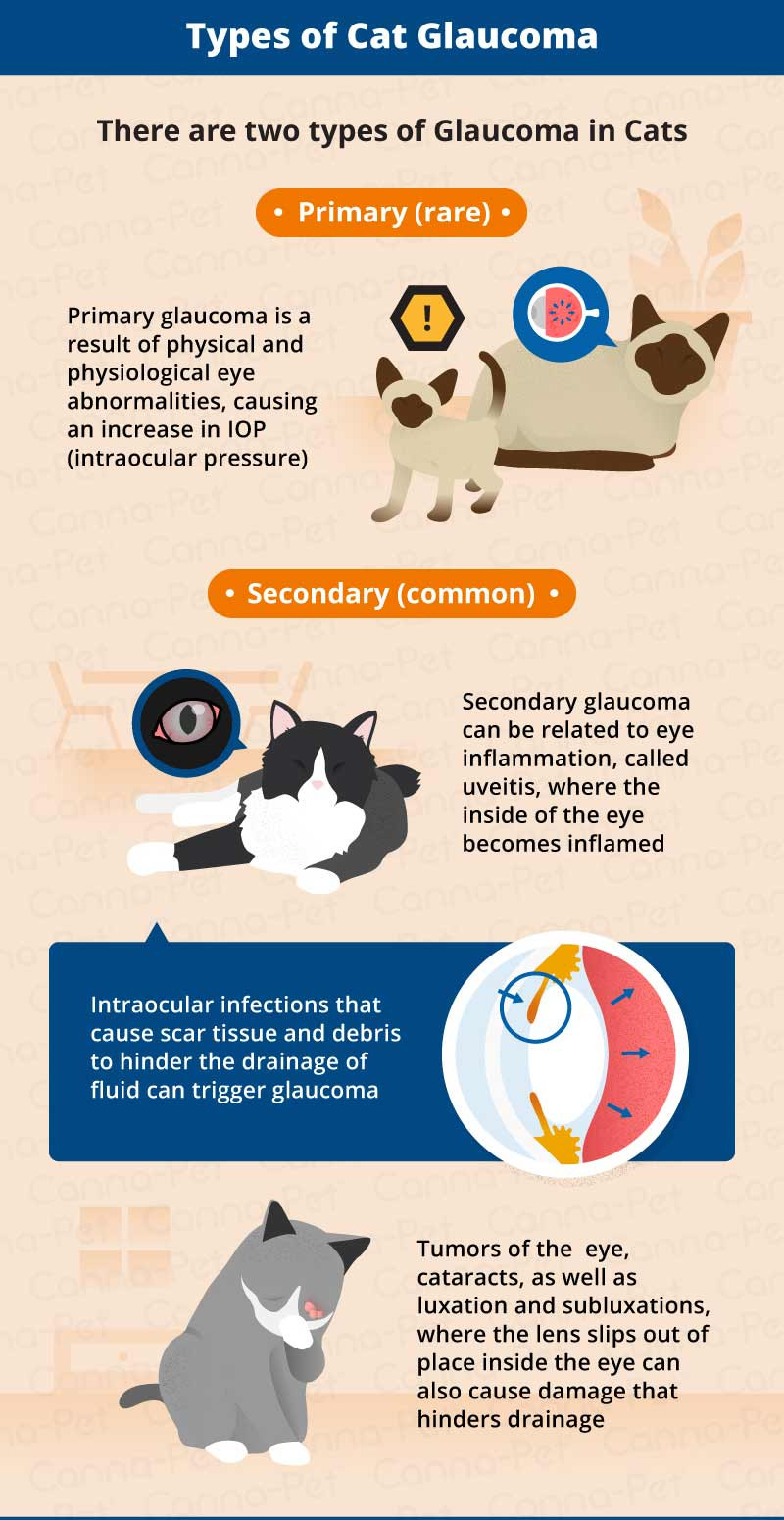 types of cat glaucoma