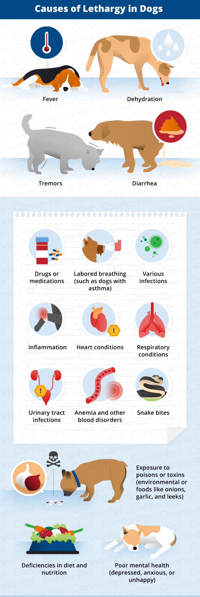 causes of lethargy in dogs