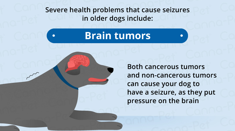 brain tumors old dogs