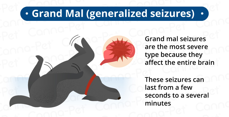 Can Seizures Cause Brain Damage In Dogs