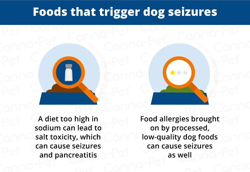 Are There Foods That Cause Seizures In Dogs