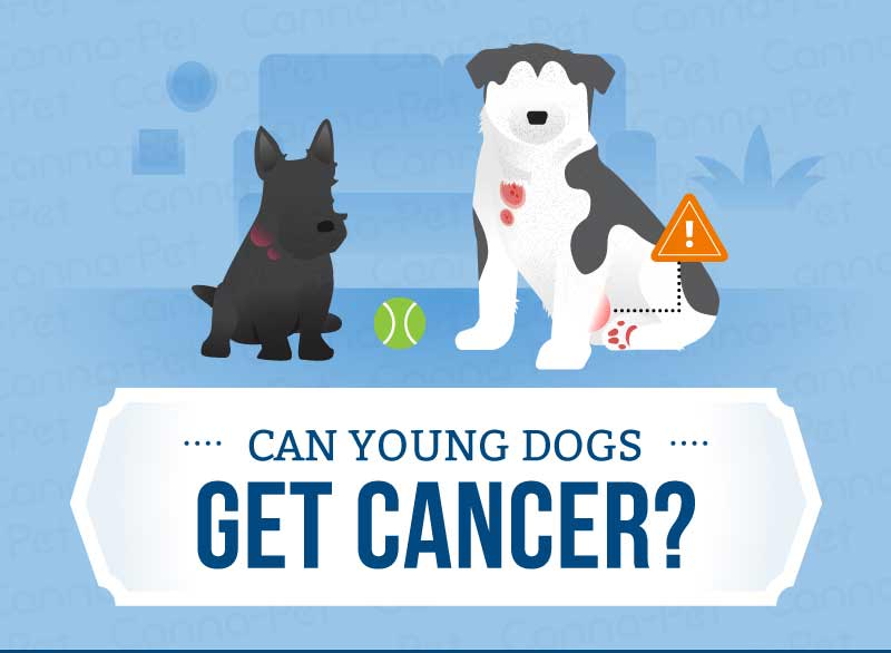 young dog cancer