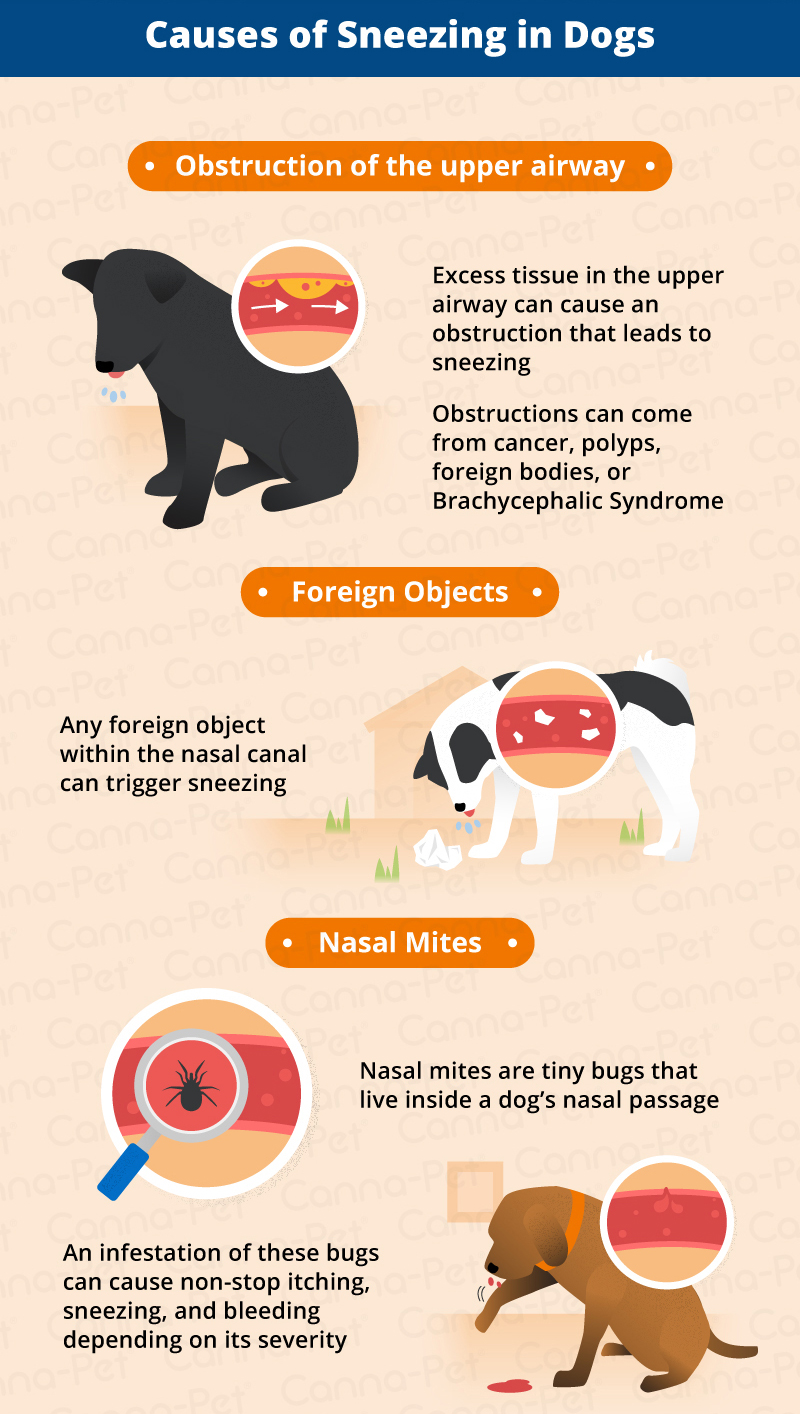 Causes of Sneezing in dogs