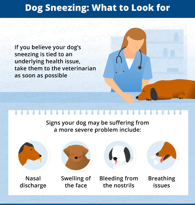 what to look for in dog sneezing