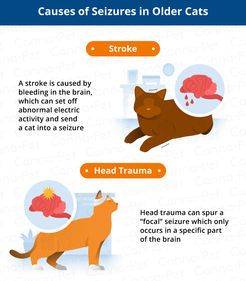 causes of seizures in older cats