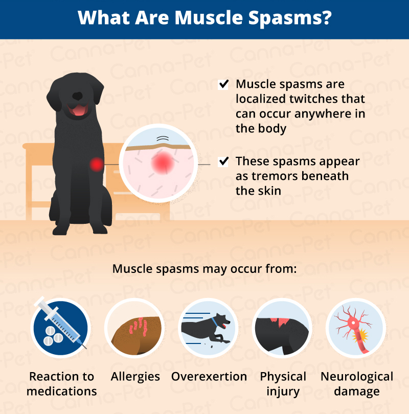 Muscle Spasms in Dogs | Canna-Pet®