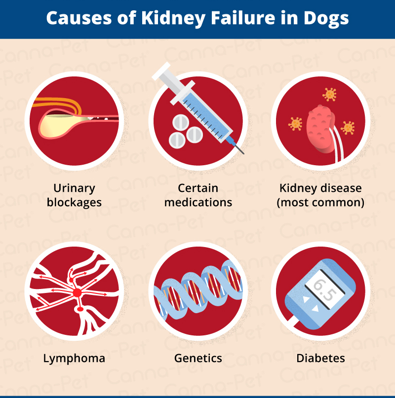 Types Of Diabetes In Dogs