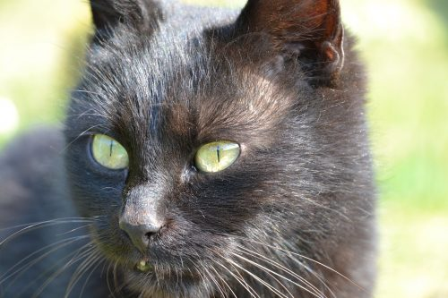 What to Do If Your Cat Has Bumps on His Skin | Canna-Pet®