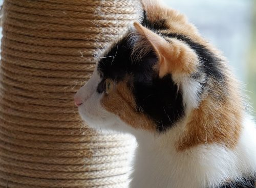 cat-skin-cancer-canna-pet
