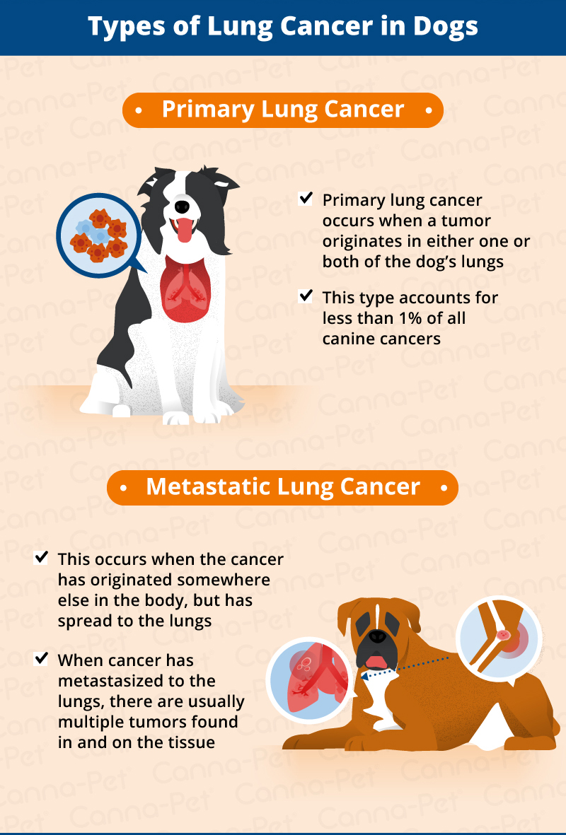 types of lung cancer in dogs