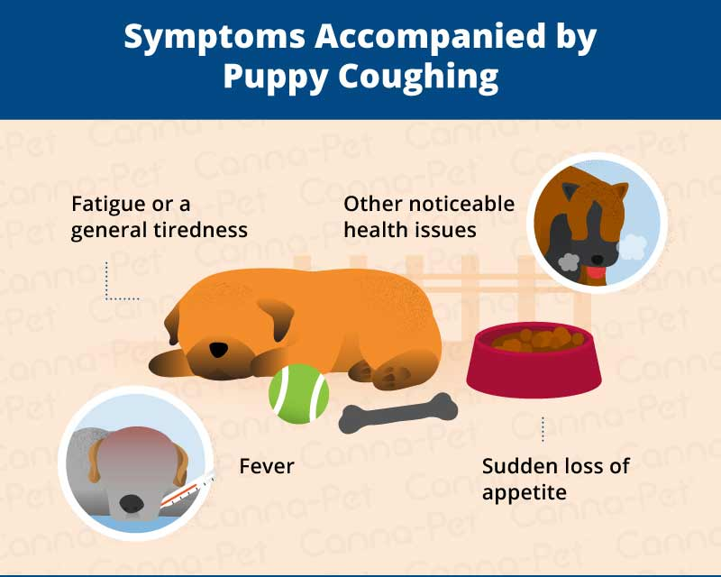 causes of puppy coughing