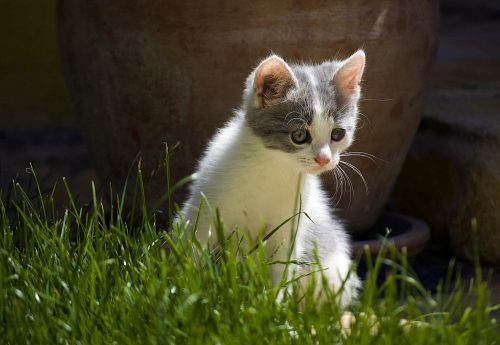 why-is-kitten-coughing-canna-pet