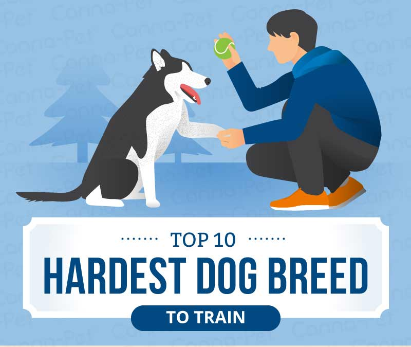 top 10 hardest dog breed to train