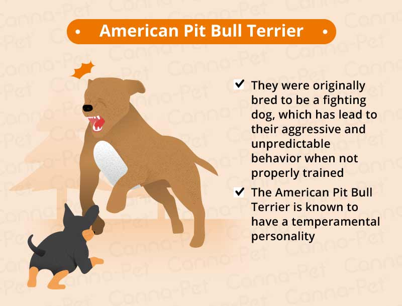 American Pit Terrier