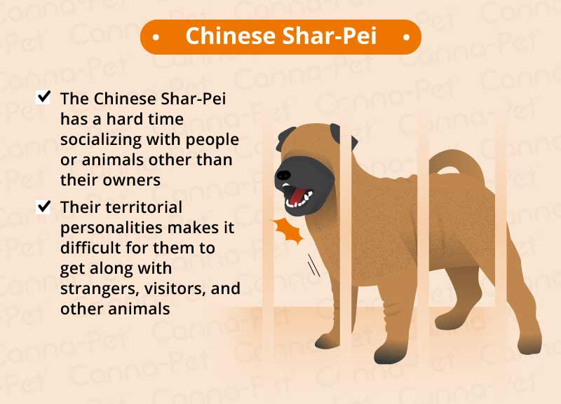 chinese share-pei